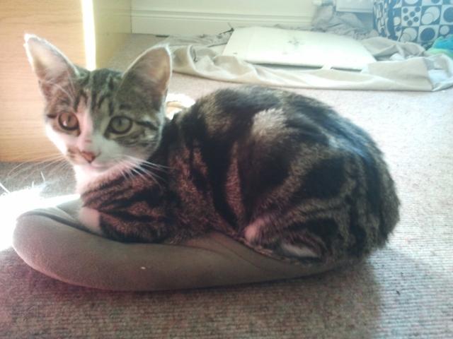 Zoe the kitten