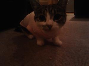 Cat pyjamas